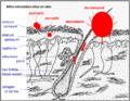 Mites-sites-of-infestation-in-skin-2.png