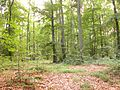Mixed-forest.jpg
