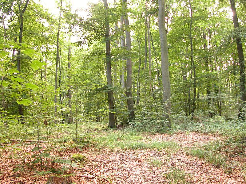 File:Mixed-forest.jpg