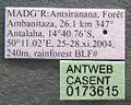 Monomorium termitobium casent0173615 label 1.jpg