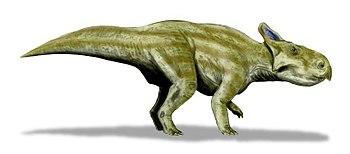 Montanoceratops BW.jpg