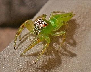 spider behaviour herberstein marie elisabeth