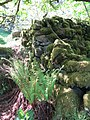 Moss covered wall - Laughter Hole - May 2012 - panoramio.jpg