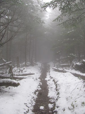 Mount Guyot (Great Smoky Mountains) - Mount Guyot; Foggy and Lonely Appalachian Trail