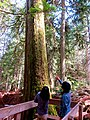Mount Revelstoke National Park 06.jpg