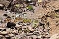 Mudpuddling from Melagiri TN IMG 6394.jpg