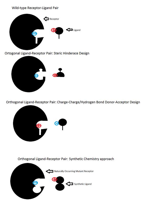 orthogonal ligand