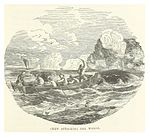 NUNN(1850) p237 CREW ATTACKING THE WHALE.jpg