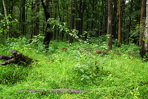 Nagarhole National Park or Rajiv Gandhi National Park