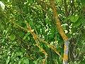 Nationalpark Hainich craulaer Kreuz 2020-06-03 3.jpg