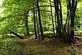 Natural monument Pod lesem in summer 2014 (9).JPG