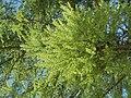 Nature in Smolensk - 34.jpg