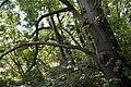 Naturschutzgebiet Haseder Busch - Im Haseder Busch (17).jpg