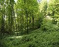 Naturschutzgebiet Hobelsberg Riesn 7.jpg