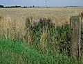 Near Summercroft Farm, New Holland - geograph.org.uk - 1444146.jpg