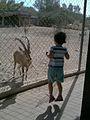 Negev Zoo Beersheva Israel IMG 0577a.JPG