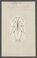 Neides - Print - Iconographia Zoologica - Special Collections University of Amsterdam - UBAINV0274 040 05 0029.tif