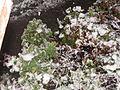 Nieve en Quinched 04.JPG