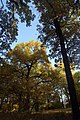 NikolaSkuridin Kreminna 2011-10-08 2.jpg