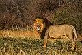 Nkomazi Game Reserve, South Africa (22652813265).jpg