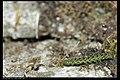 Noctuidae (8452803852).jpg