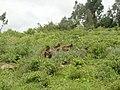 North Shewa, Ethiopia - panoramio.jpg