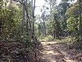 Nova Mutum - State of Mato Grosso, Brazil - panoramio - LUIS BELO (13).jpg