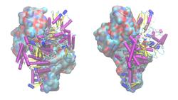 α-Ketoglutarat-Dehydrogenase E1