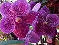 Ochid flowers.jpg