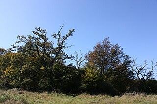 Okšov oaks protected area