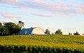 Olszewski Family Farm - panoramio.jpg