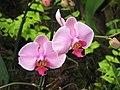 Orhideje 10.jpg