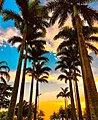 Orla da praia de Santos.jpg