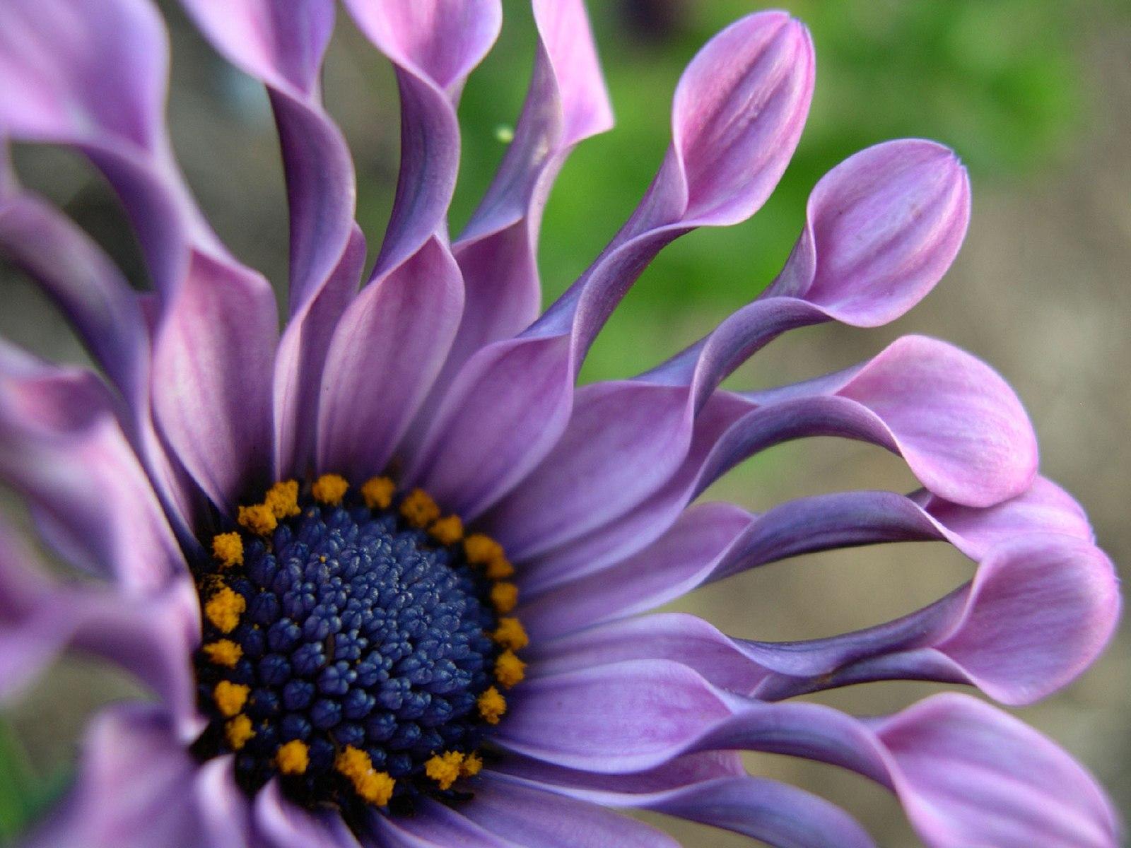 Фото самого красивого цветка