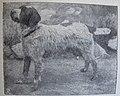 Ottův slovník naučný - obrázek č. 3092.JPG