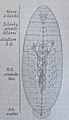 Ottův slovník naučný - obrázek č. 3121.JPG