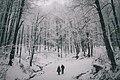 Pădurea Neagră, Romania (Unsplash).jpg