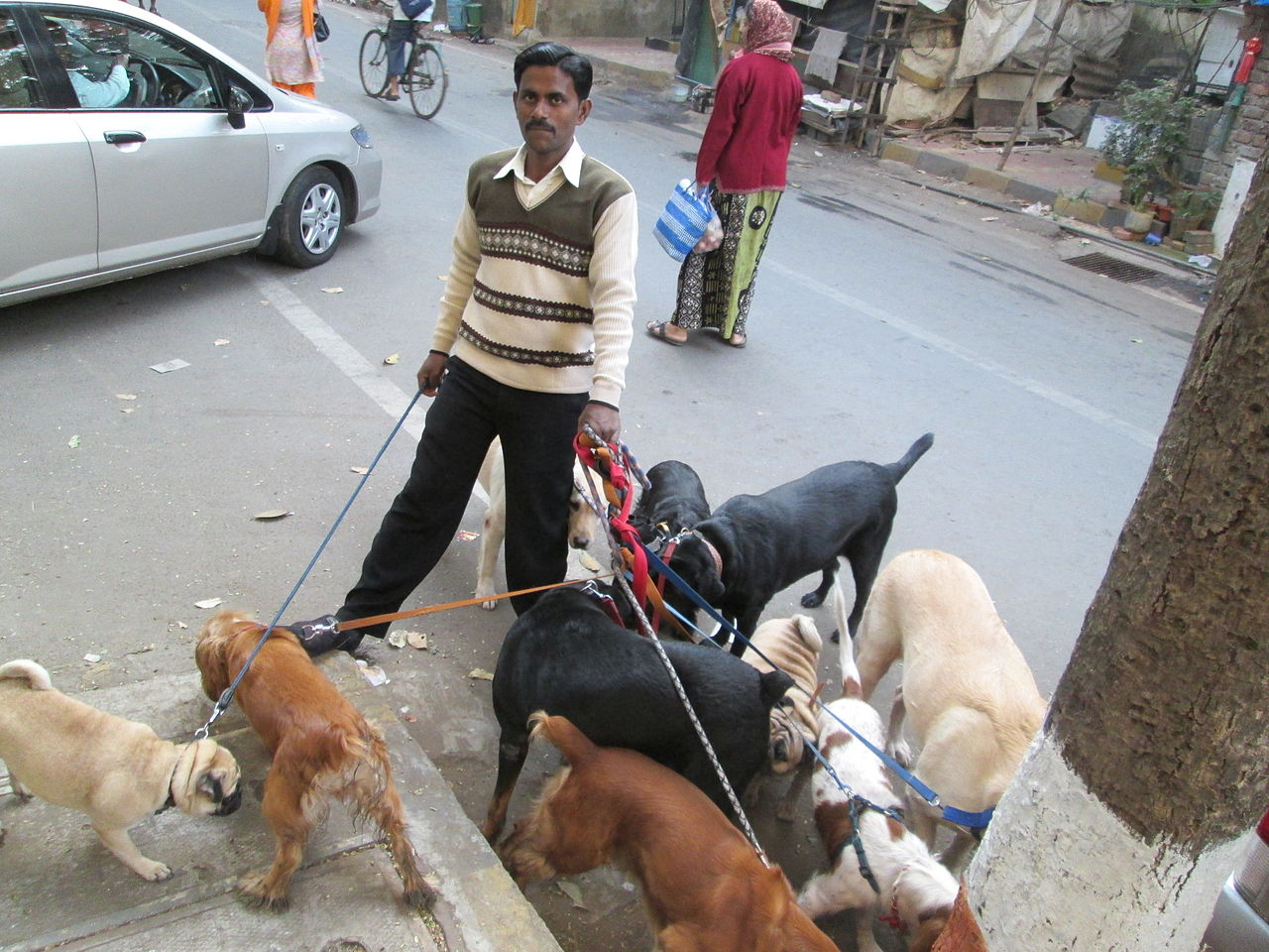 File:Pack of dogs with their 'Dog Walker'.JPG - Wikimedia ...