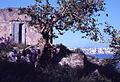 Paolo Monti - Servizio fotografico (Procida, 1972) - BEIC 6359549.jpg