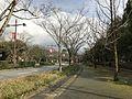 Park Road in Yamaguchi City 3.jpg