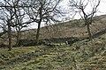Park Wood - geograph.org.uk - 1211005.jpg