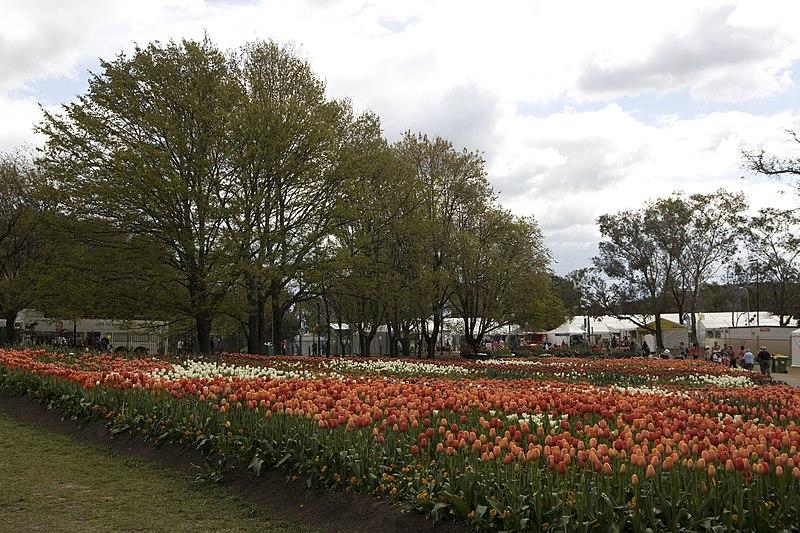 File:Parkes ACT 2600, Australia - panoramio (61).jpg