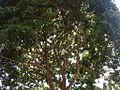 Parque del Este 2012 074.JPG