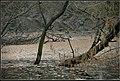 Paszab, 4475 Hungary - panoramio (7).jpg