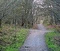 Path, Clandeboye (2) - geograph.org.uk - 754808.jpg