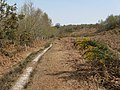 Path through heathland area of Ashdown Forest - geograph.org.uk - 1817570.jpg