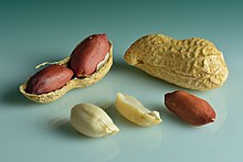 Peanuts (Arachis hypogaea) - in shell, shell cracked open, shelled, peeled.jpg