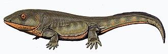 Whatcheeriidae - Pederpes finneyi