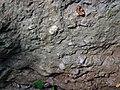 Pedogenic breccia (Conemaugh Group, Upper Pennsylvanian; creek cut on the western side of Caldwell, Ohio, USA) 5.jpg