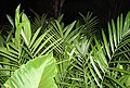 Pembibitan kelapa sawit (28).JPG